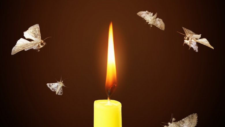 moths to flame candle