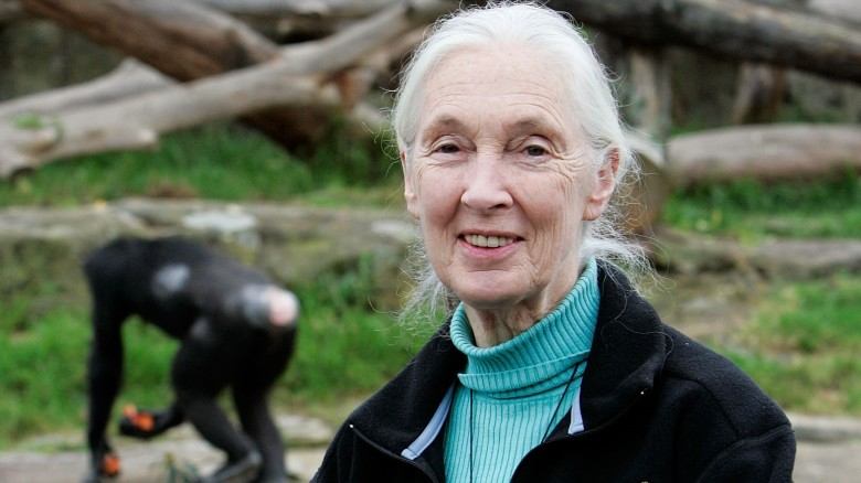 the amazing life of jane goodall the famous biologist Odds are you've heard the name jane goodall at some point in your life after all, she is one of the most remarkable women on the planet and is recognized for her achievements as an ethologist.