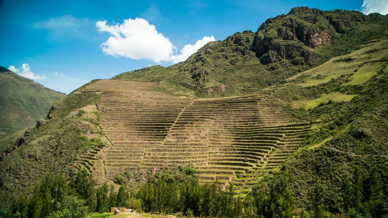 Farming terraces in the Andes