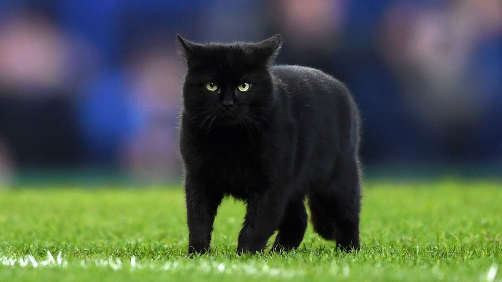 The reason people think black cats are bad luck