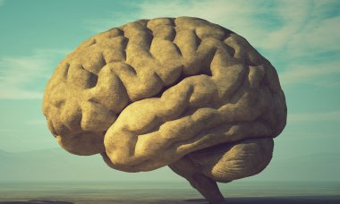 facts-about-human-brain-people-get-wrong